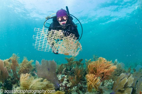Diver with Garbage Helps Clean Ocean