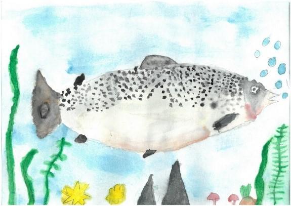 Fish Art Contest