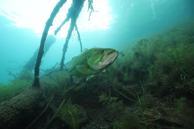 Aqua Vu Bass