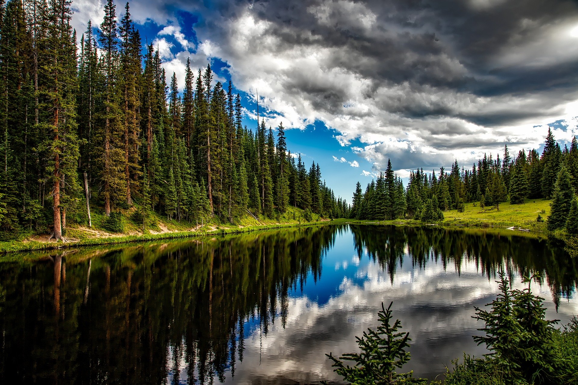 Scenic lake with tall pines