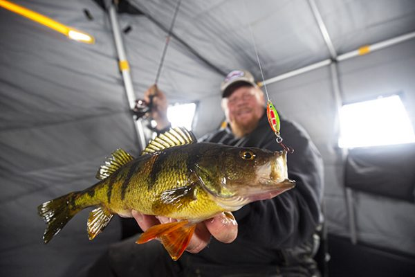 Angler Catches Yellow Perch on Northland Spoon