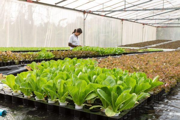 Aquaculture Garden