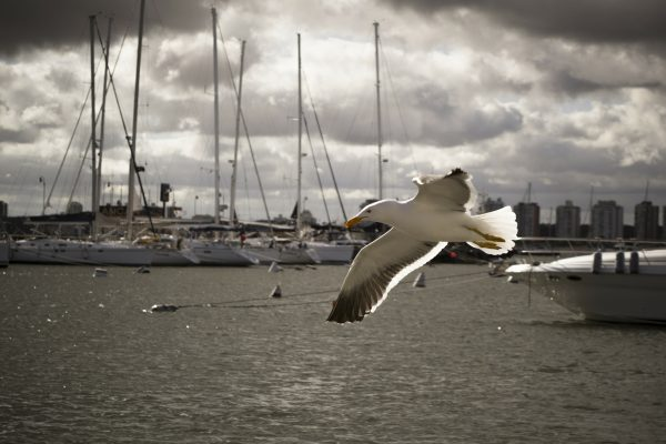Seagull in Harbor