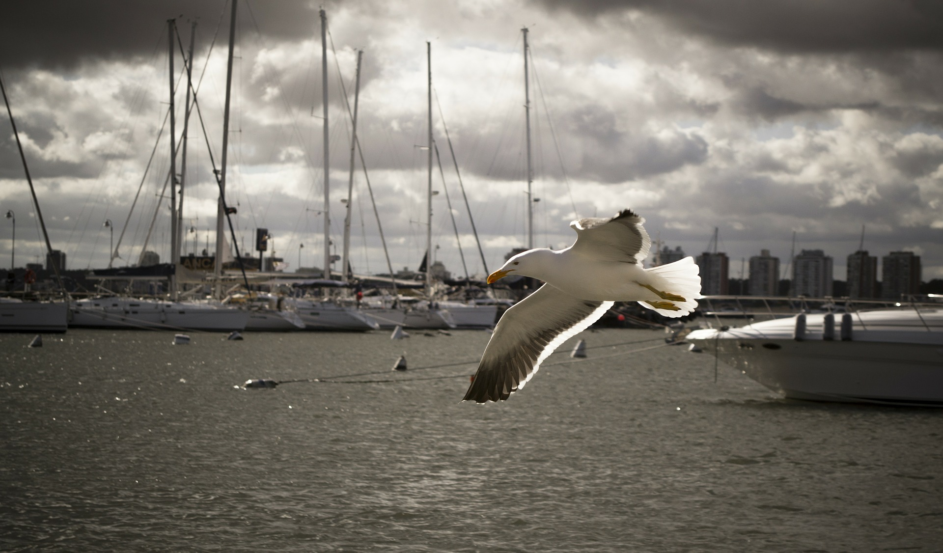 Seagull in Harbor