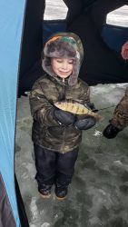 Child holds perch fish