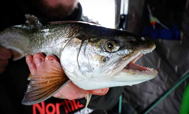 Angler Holds Lake Trout