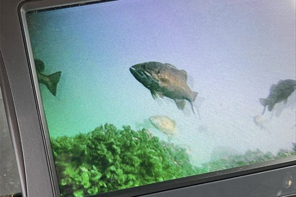 Smallmouth Bass on Underwater Camera
