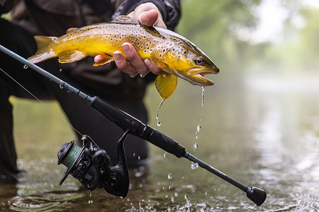 Angler lands Brown Trout
