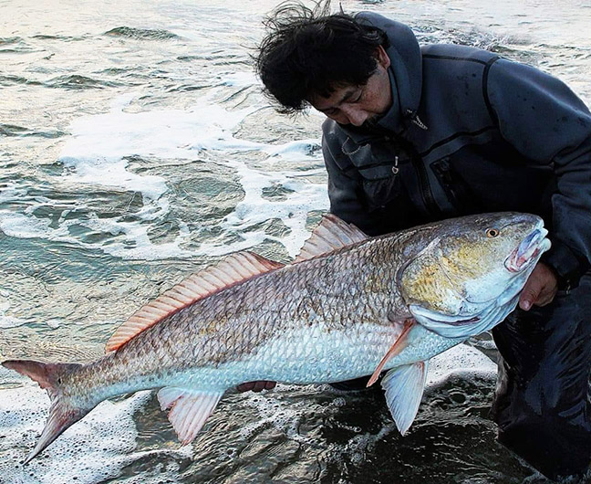 Saltwater Angler with Redfish